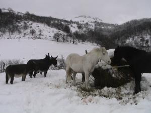 hiver2008-005