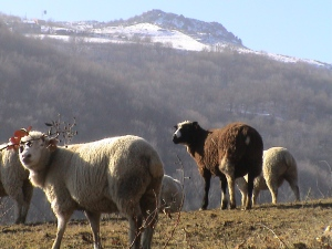 janvier-2009-058