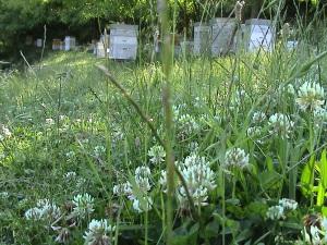 printemps 2009 badaou api 038