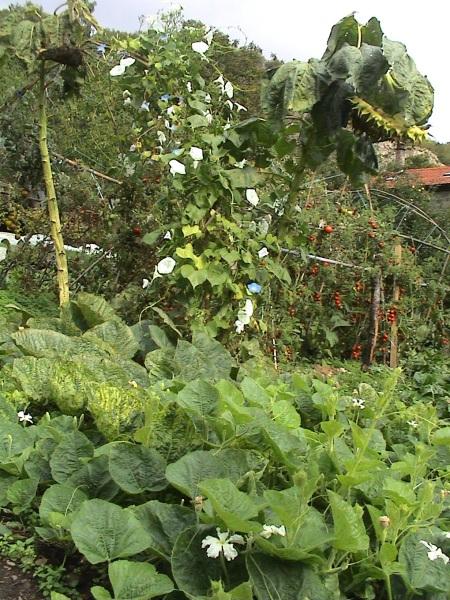 jardin octobre 002