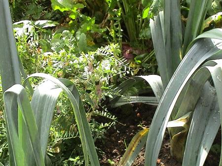 jardin octobre 006