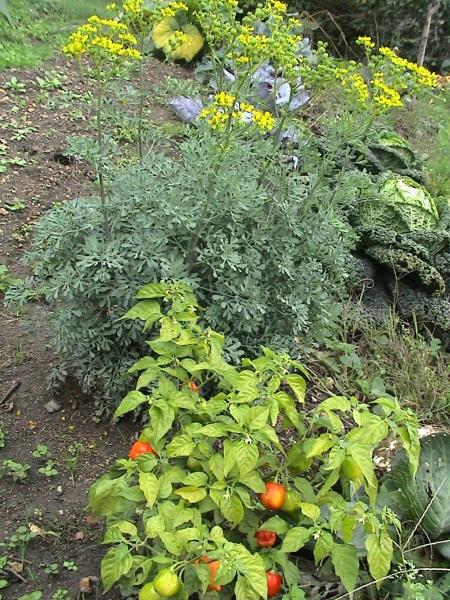 jardin octobre 026