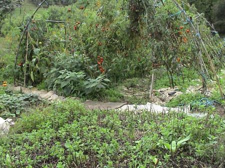 jardin octobre 032